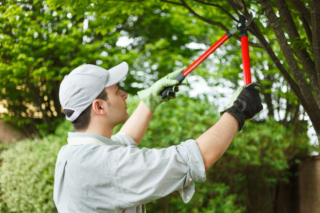 Tree Service – What Will You Expect From It?
